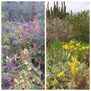 flowers desert museum