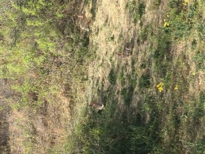 Can you spot all 3 bunnies from Balmorhea State Park?