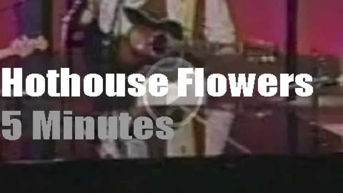 On TV today, Hothouse Flowers with David Letterman (1989)