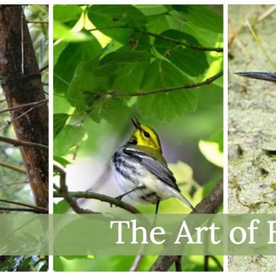 The Art of Birding