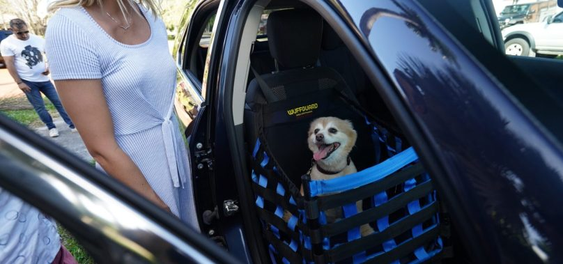 A New Car Seat to Keep Your Pets Safe