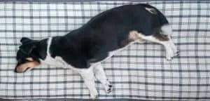rv mattress topper