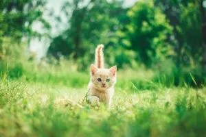 stop cats from escaping your RV