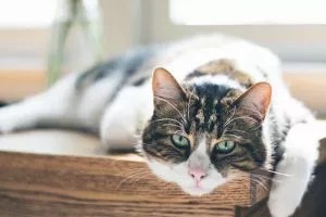 Prepare your RV to keep cats from escaping RV