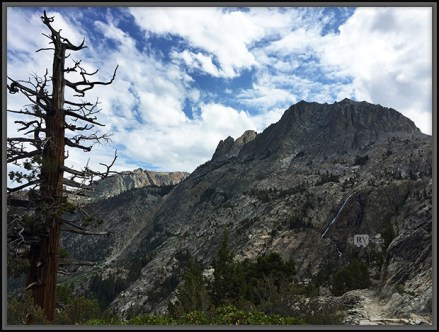 Carson Peak with Waterfall and An Old Tree