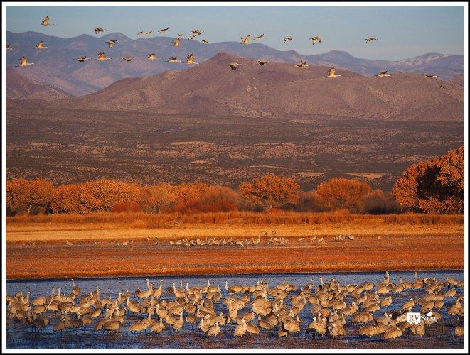 A Paradise for Birds – Bosque Del Apache