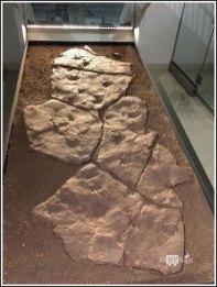 Fossil Trackways of Dimetrodon