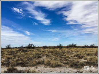Desert View with Salt Cedars and Saltgrass and Saltbushes