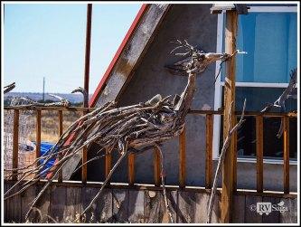 Drift Wood Art-Roadrunner