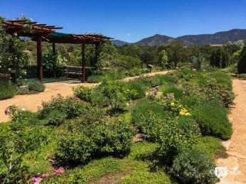 Rose Garden at Santa Fe Botanical Garden