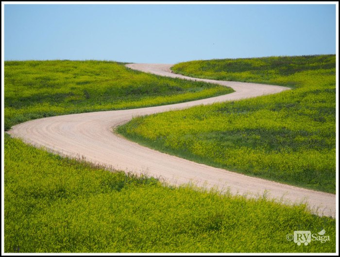 A-Sinuous-Road-Among-Wildflowers