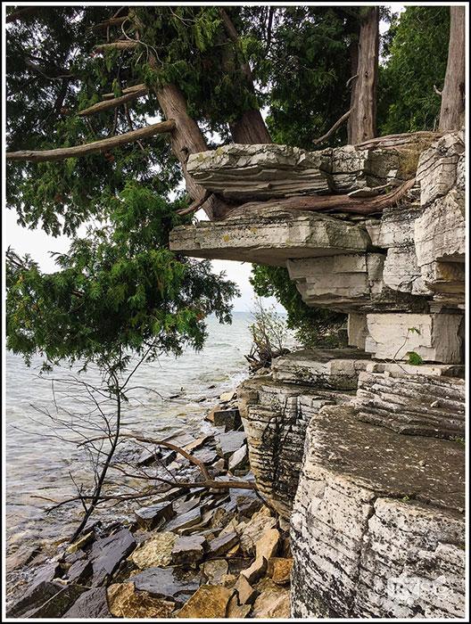 Northern-White-Cedar-Holds-on-to-Limestone-Cliffs