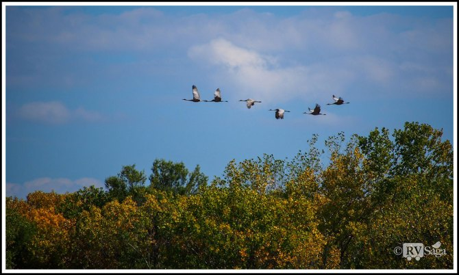 A Safe Haven for Birds – Bosque Del Apache