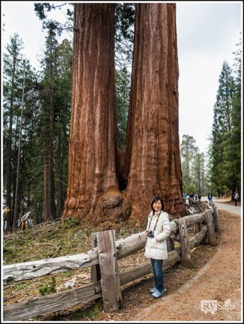 Weiwei with the Twin Sequoia at Kings Canyon National Park. Photo Credit: Stephen Jones