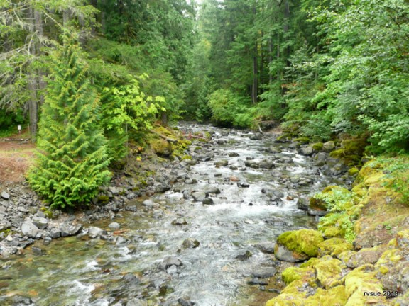 The North Fork of the Cispus as seen from the bridge by the campground