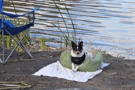 Bridget and I relaxed at the water's edge.  Spike, however, had to go in for a soak.