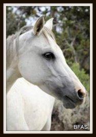 1-graciehorse
