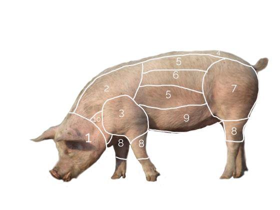 Schwein_einteilung