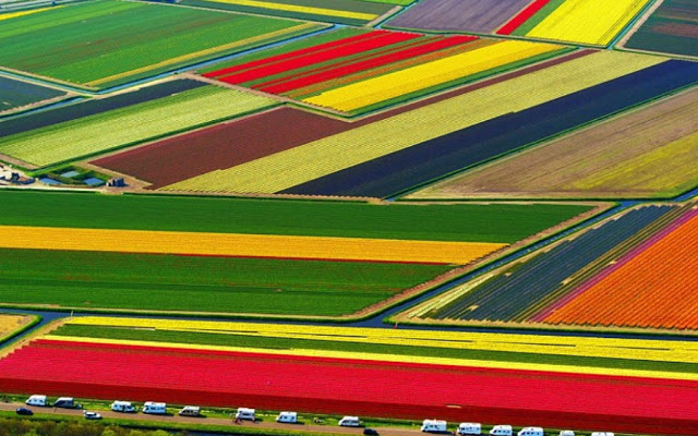 اماكن ساحرة - الحقول الملونة في هولندا