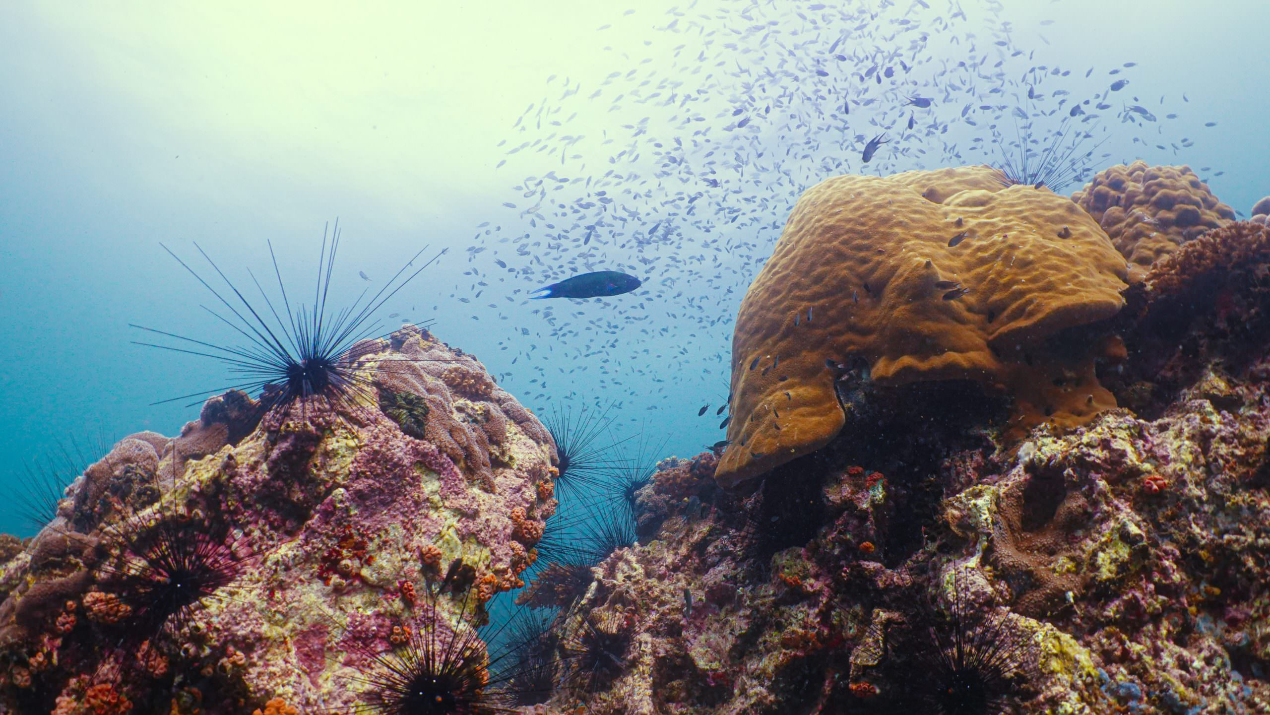 الجزر المرجانية