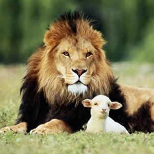 Lion or Lamb?
