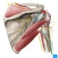 Triceps Muscle Tendinopathy
