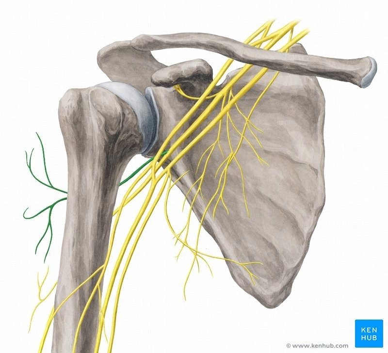Triceps Tendon Rupture