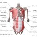 What Is Quadratus Lumborum Muscle?
