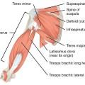 Muscle Of Upper Limb
