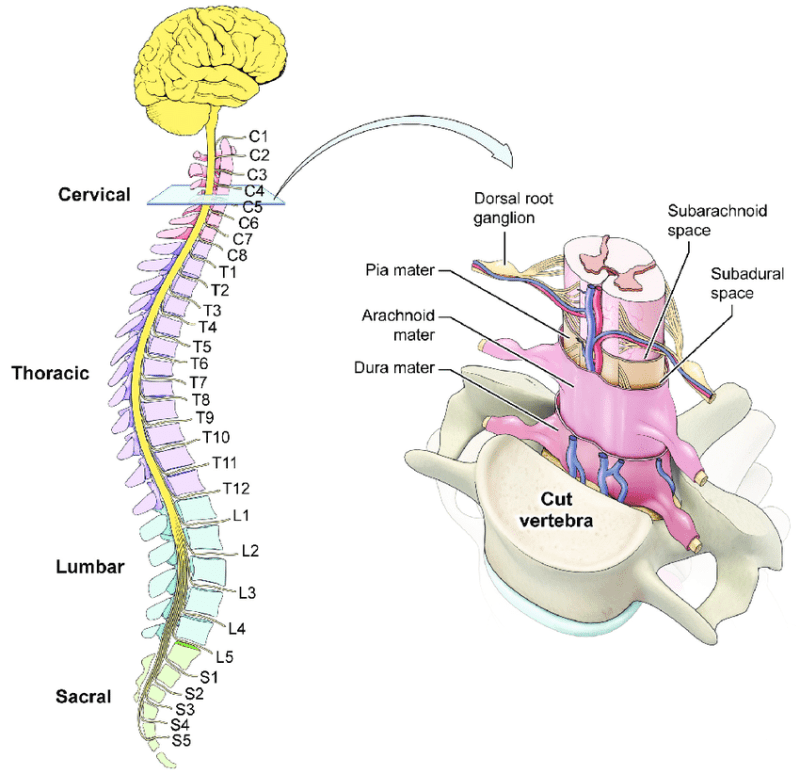 Prolapsed Intervertebral Disc