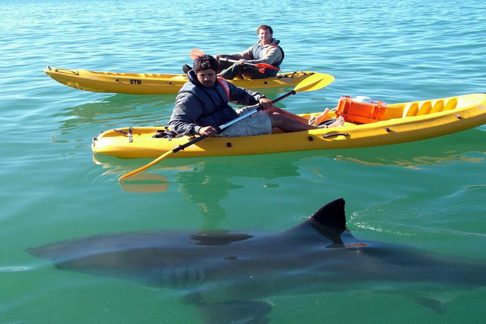 Success - using my sound recordings to attract sharks to a canoe... hmm