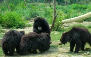 WSOS bears-2