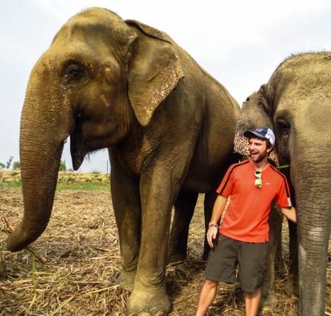 WSOS elephants3-2