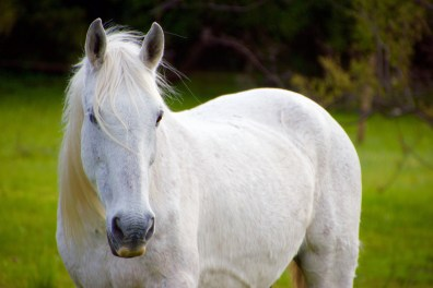 Horse on our ranch in Uruguay.