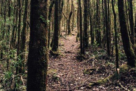 Costa Rica trail in rainforest