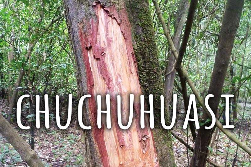 Chuchuhuasi medicinal tree bark from Amazon
