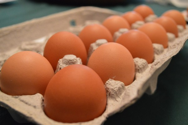 Fresh Eggs from Ryan Family Farm