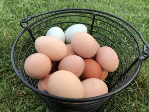 Farm fresh eggs at Ryan Family Farm in Graham WA