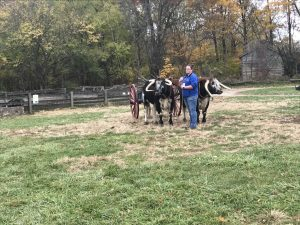Learning to drive the oxen
