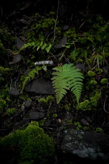 Untitled Plant 1