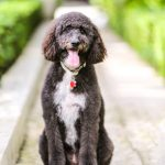 Pet Photography Palm Beach
