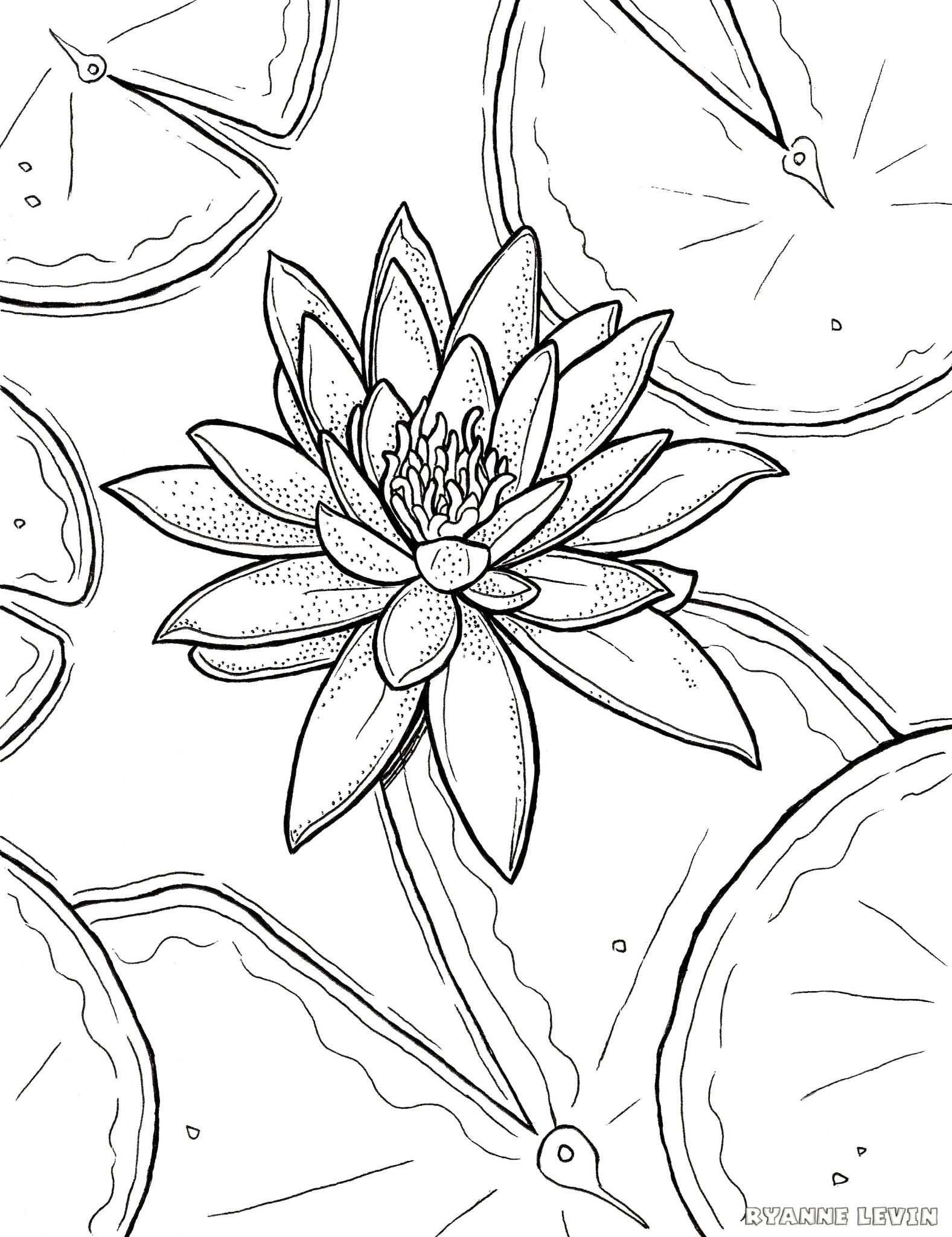 FREE Printable Water Lily Coloring Page Download