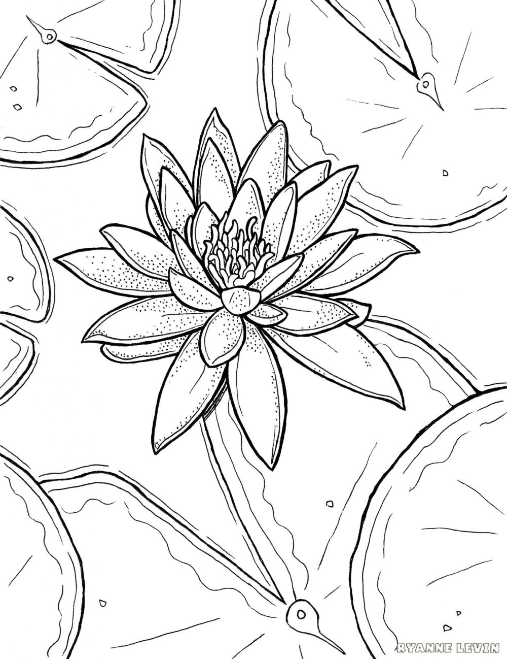 medium resolution of free printable water lily coloring page download u2013 ryanne levinfree printable water lily coloring page