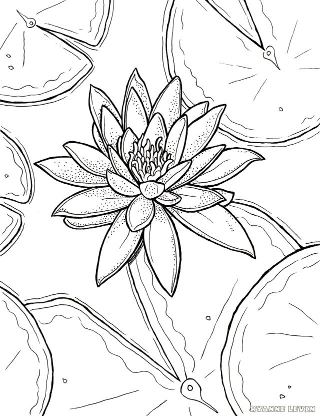 FREE Printable Water Lily Coloring Page Download – Ryanne Levin