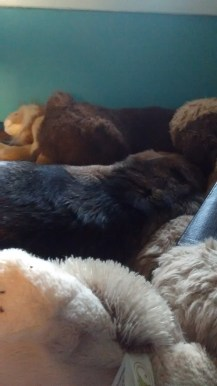 Tia pretends to be a teddy bear