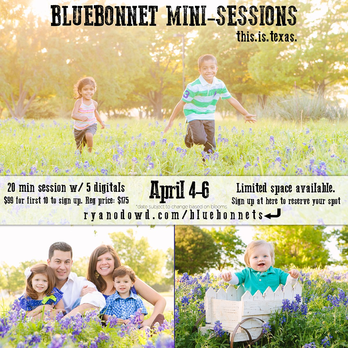 2014 frisco mckinney plano bluebonnet mini sessions