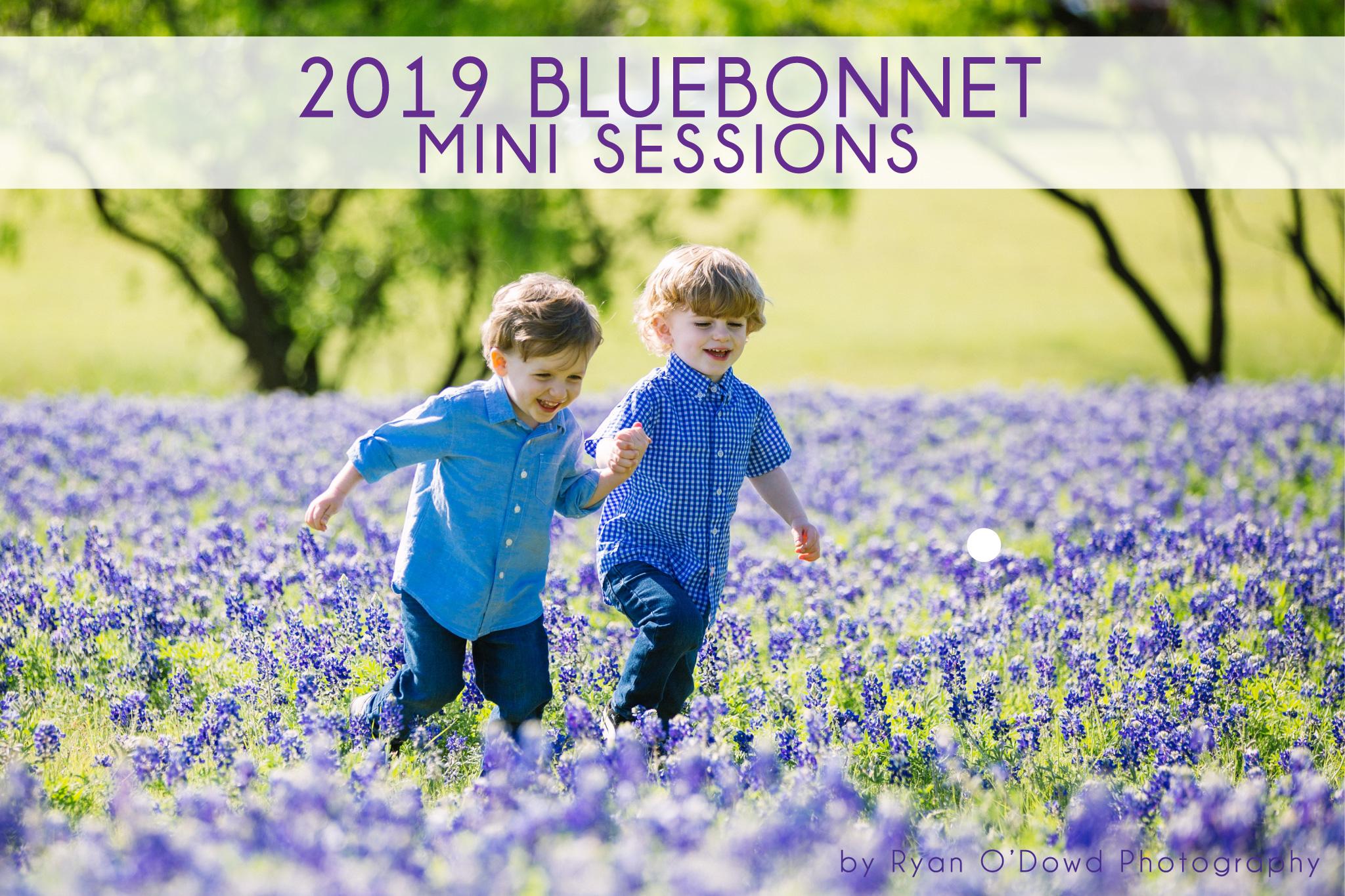 2019 bluebonnets