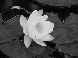 flowers 2002 016