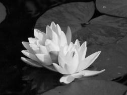 flowers 2002 026