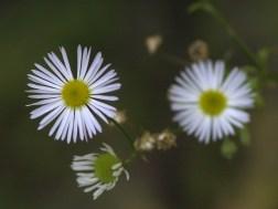 flowers 2002 047